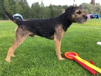 Popeda's Good Boy ROP Mäntsälä KR 2018 1